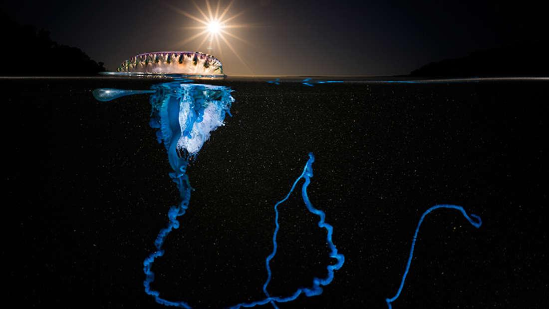Победители конкурса Ocean Art Photography 2016