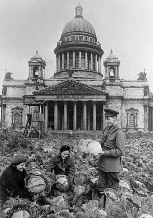 ленинград во время блокады картинки