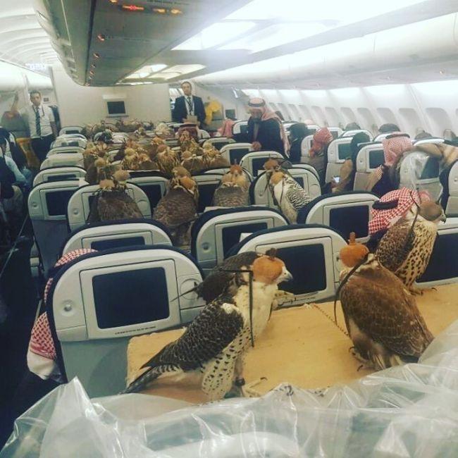 Саудовский принц купил 80 авиабилетов для ястребов