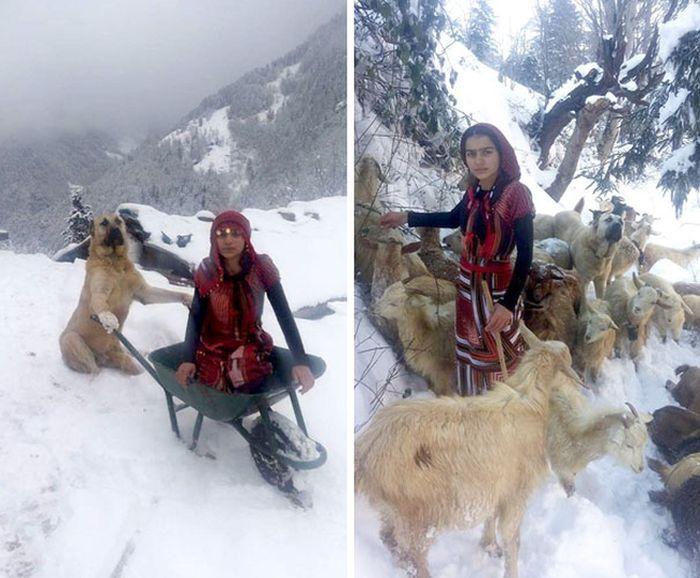 Девочка и ее собака спасли козу с новорожденным козленком