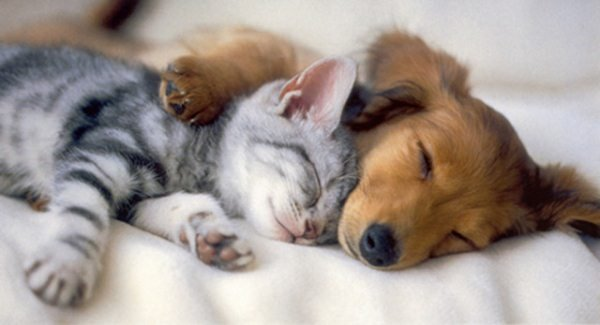 Дружба между животными разных видов