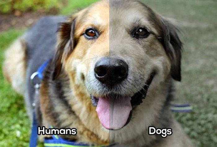 Сравнение зрения человека со зрением различных животных