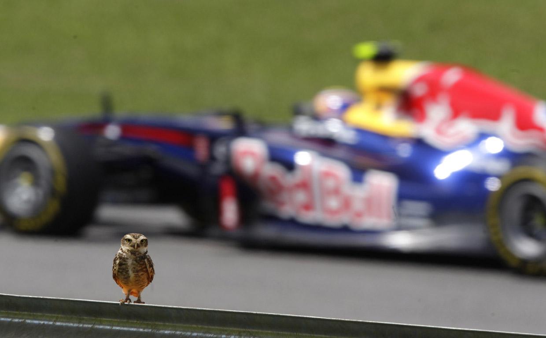 Супер-совы: прекрасные хищники