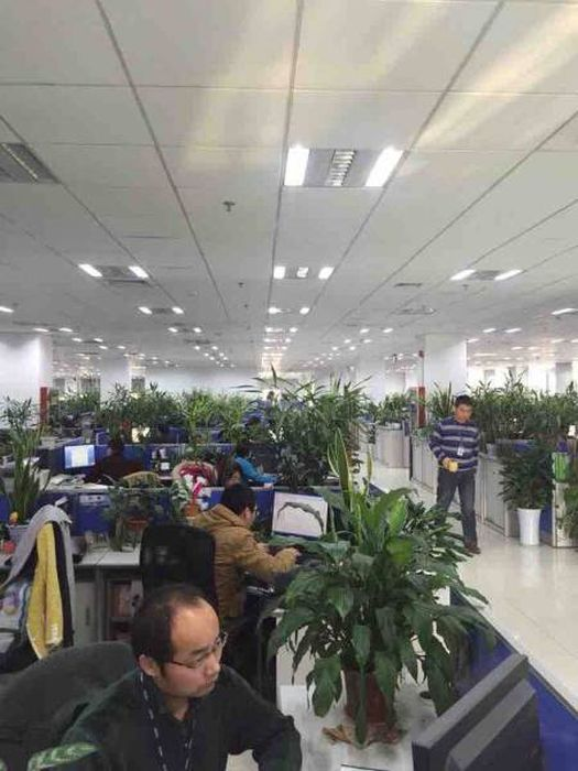Прикольные фото из Китая