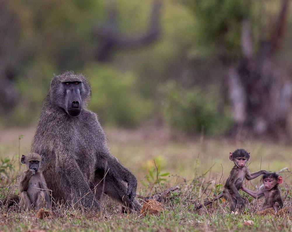 Африканские животные в объективе Правира Пателя