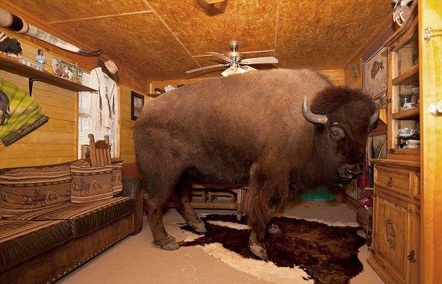 Техасская пара держит в доме бизона