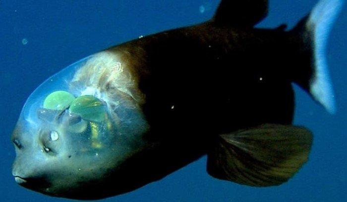 Эти чудовища из океана потрясают воображение