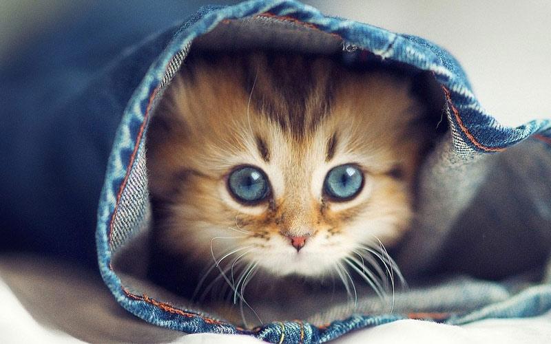 30 котов, которые незаменимы в хозяйстве