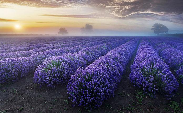 Удивительная красота природы. ФОТО