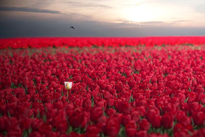 udivitelnaya-krasota-prirody-9 Удивительная красота природы. ФОТО