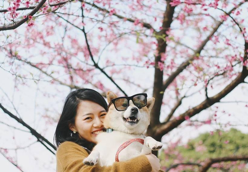 Весенние фото цветущей сакуры из японского Инстаграм