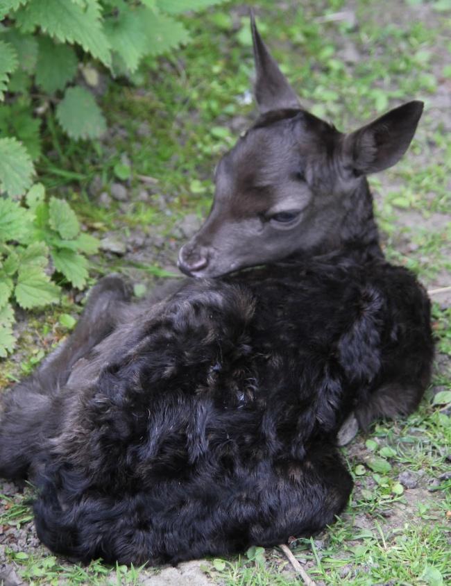 17 темных животных, которых раскрасила сама ночь