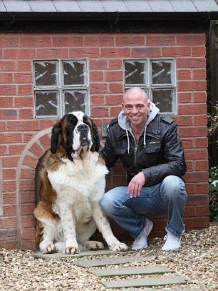 Крутой домик для собаки