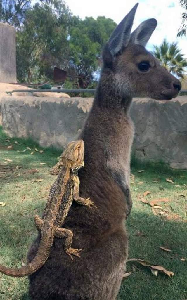 Забавные животные на фотографиях