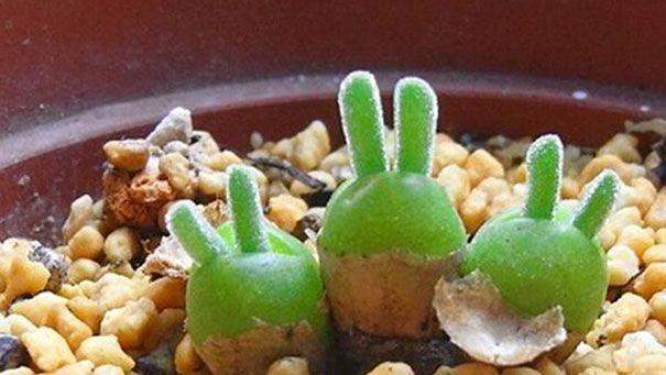 Японские ботаники разводят растения в виде дельфинов и кроликов