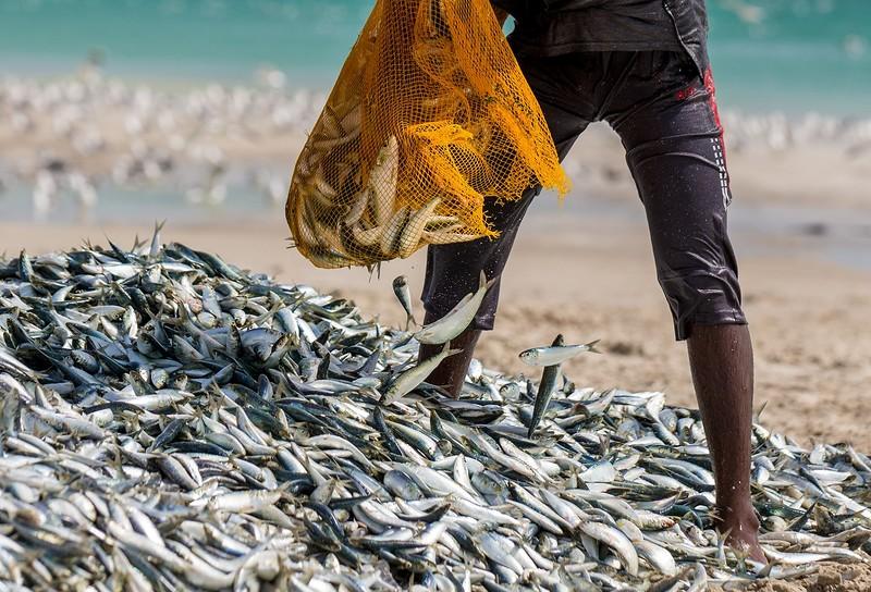 Рыбаки Омана на колоритных снимках