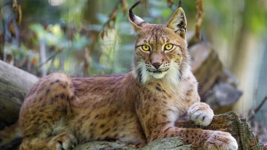 Самые красивые животные нашей планеты