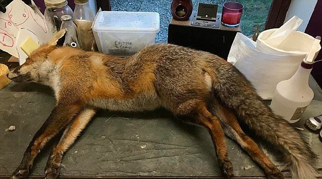 Веган-таксидермист мастерит женские сумочки из убитых животных