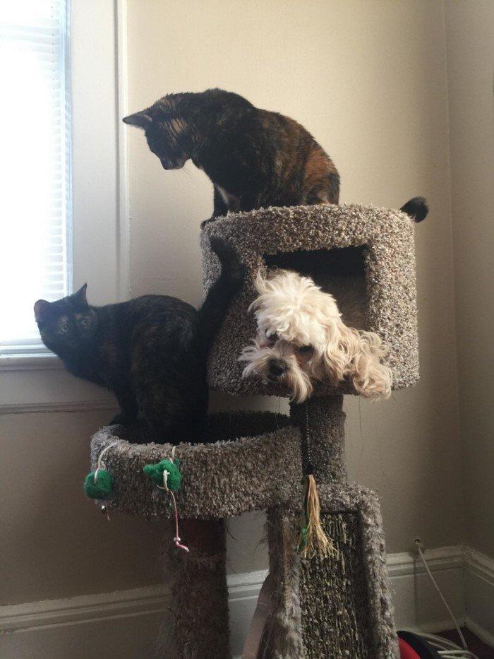 Кошки и собаки, которые поменялись ролями