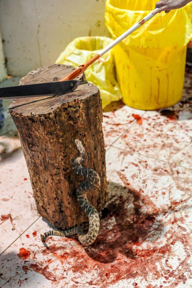 Техасский фестиваль, на котором убивают тысячи гремучих змей