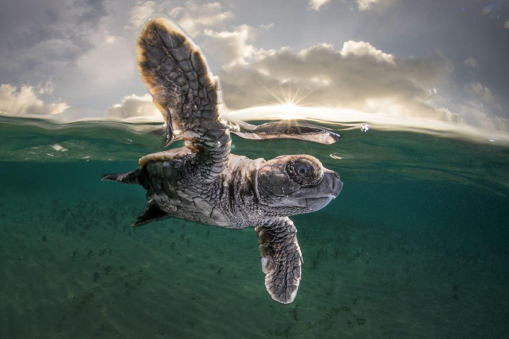 Лучшие фотографии апреля 2017 от National Geographic