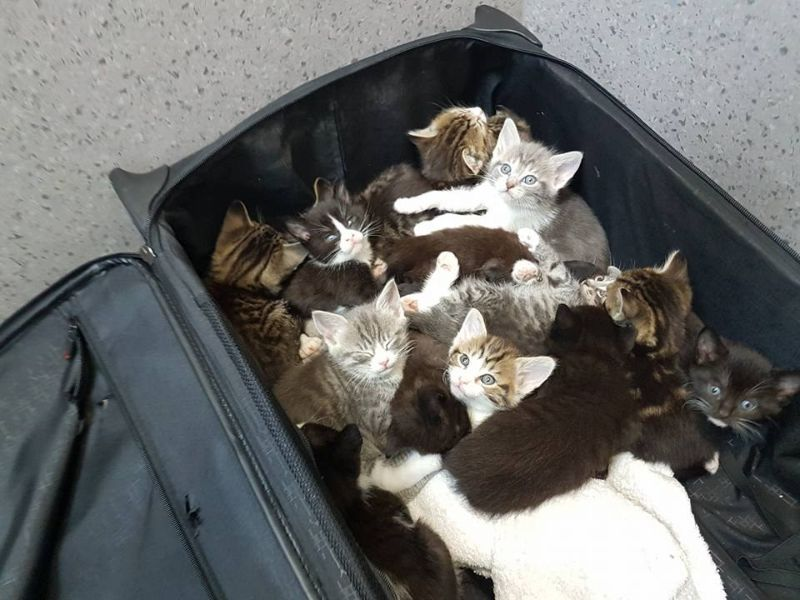 Медсестра нашла на обочине полный чемодан котят