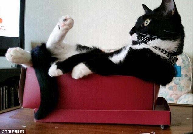 Кошки любят коробки и все, что на них похоже