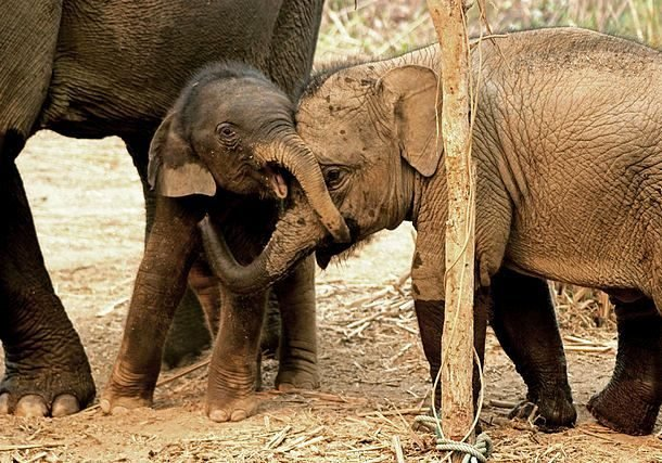 Забавные и милые слонята заряжают позитивом