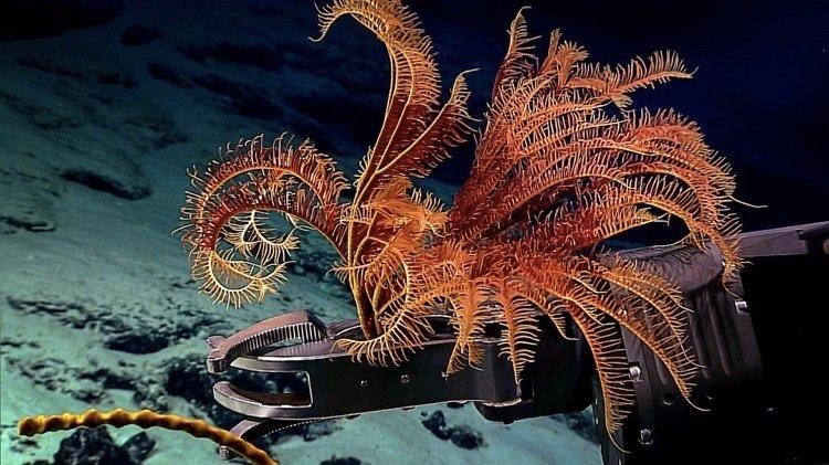 Глубоководные обитатели Тихого океана
