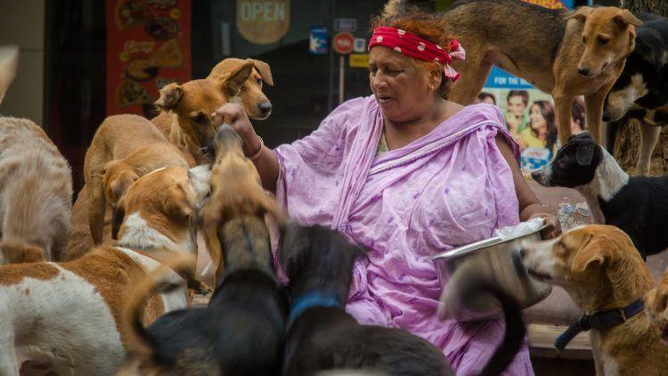 Картинки по запросу Индийская старушка приютила четыре сотни собак