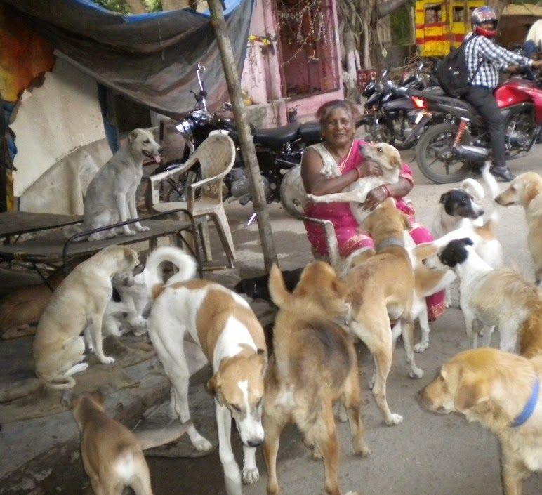 Индийская старушка приютила четыре сотни собак