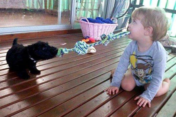 Почему не стоит оставлять домашних животных с детьми