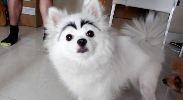 Собаки с бровями или мой хозяин идиот