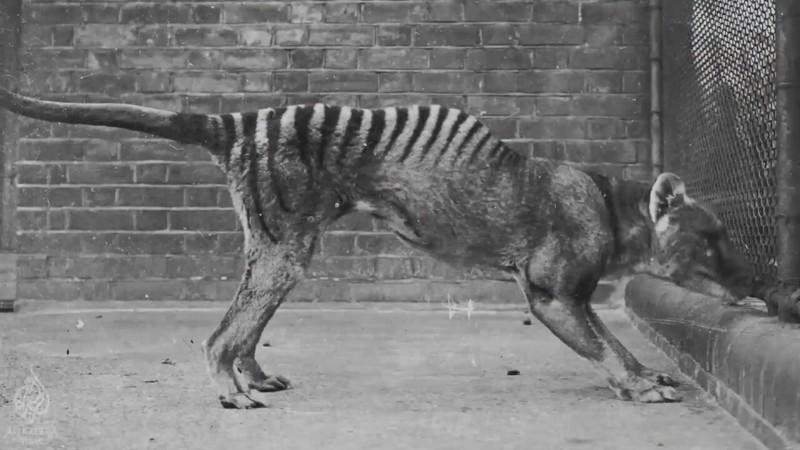 Животные прошлого, которых могут вернуть к жизни