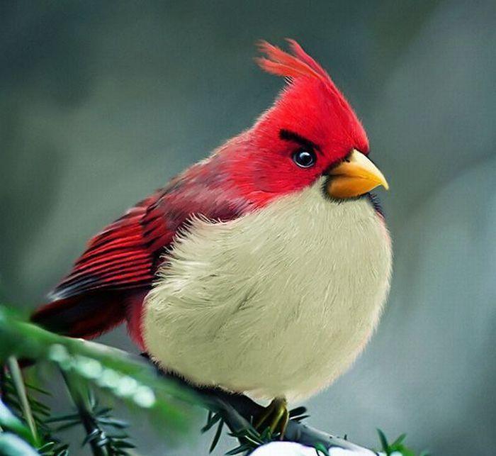 Angry Birds в реальности