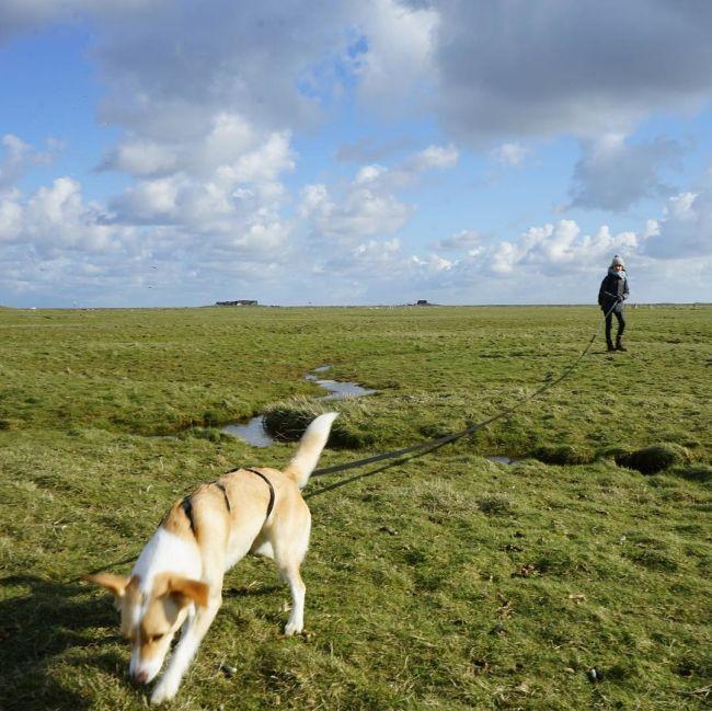 Халлиги - временные острова у побережья Северного моря