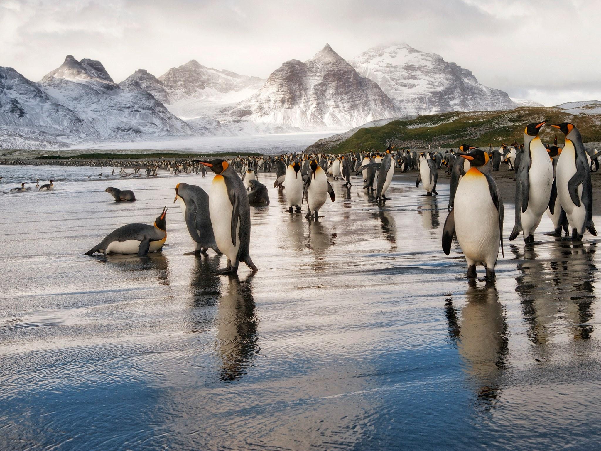 Уникальное ледовое царство Антарктиды
