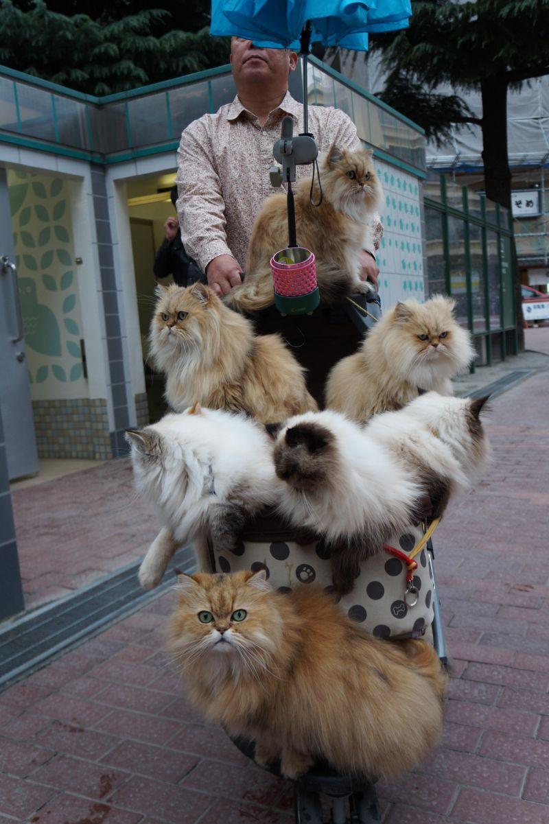 Японец разгуливает по улицам с полной коляской котов
