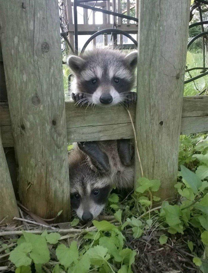 Животные заглянули: неожиданные визитеры