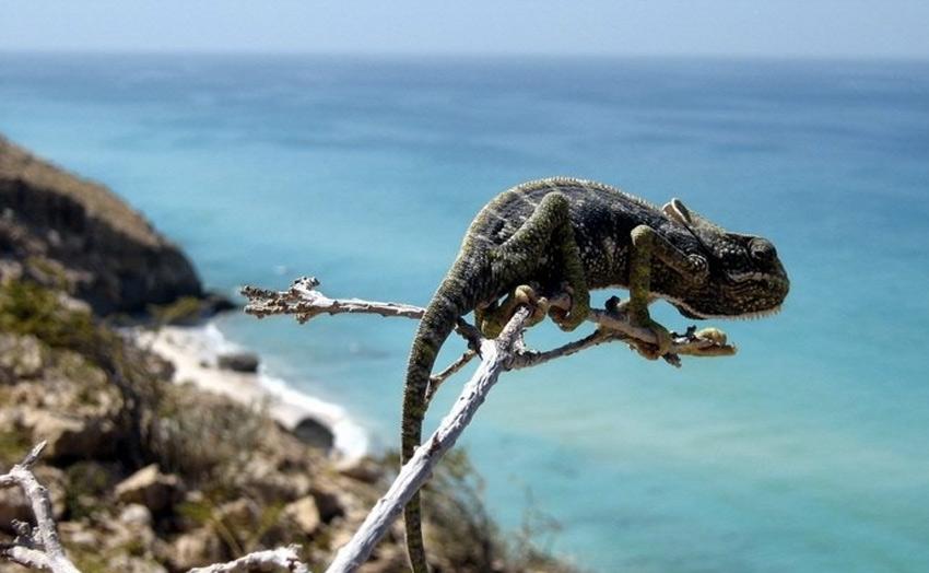Прогулка по самому удивительному острову Сокотра