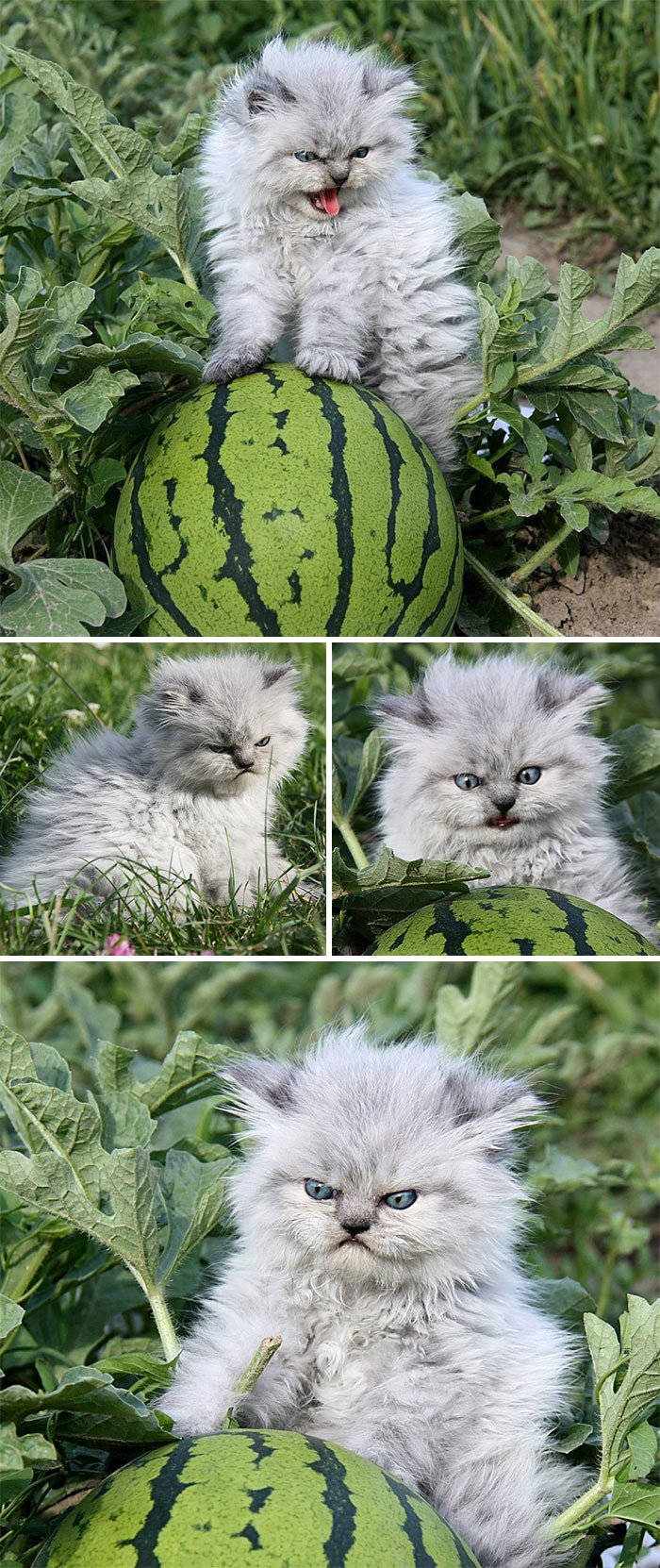Сердитые и очаровательные котята