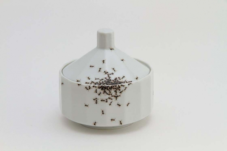 Художница создала посуду с реалистичными муравьями