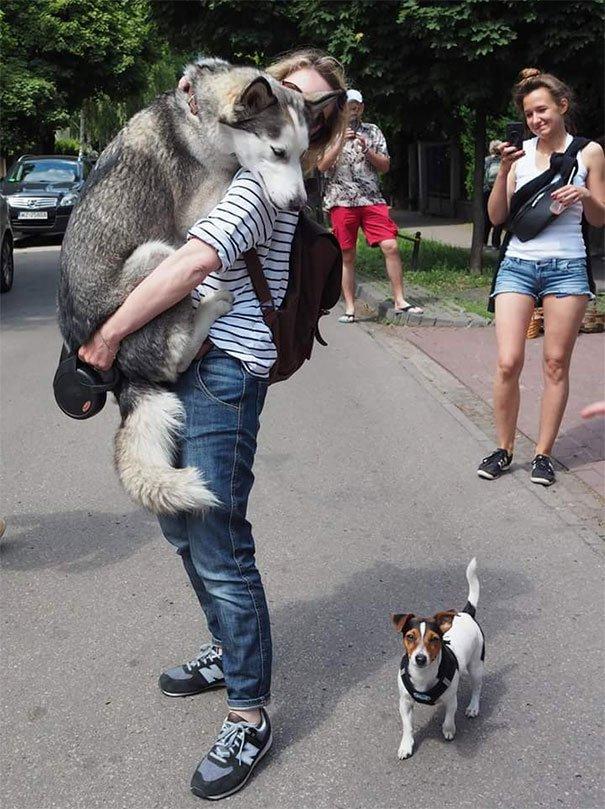 Когда собаки боятся простых вещей