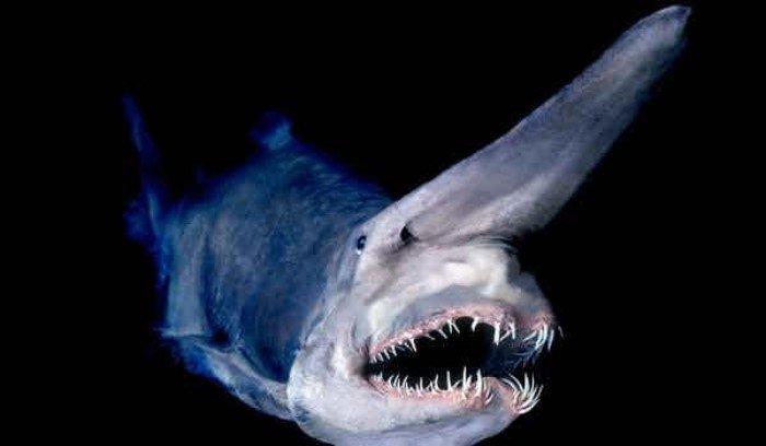 15 самых жутких созданий из глубин океана