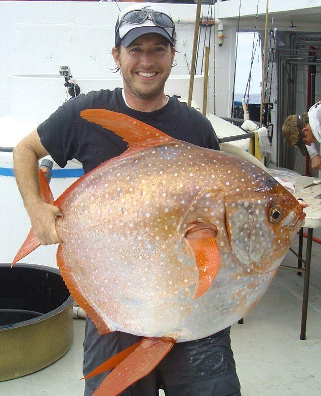 Рыбак выловил редкую опаху весом 40кг