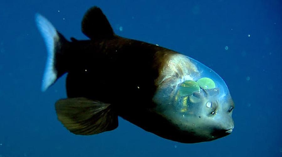 10 прозрачных существ нашего мира