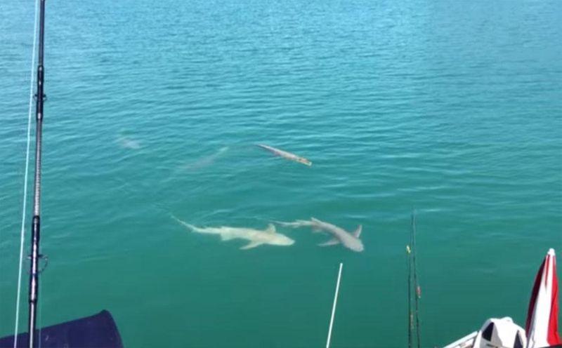 Типичная картина во время рыбалки в Австралии