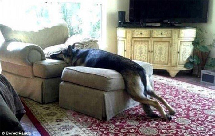 Собаки и правила в доме