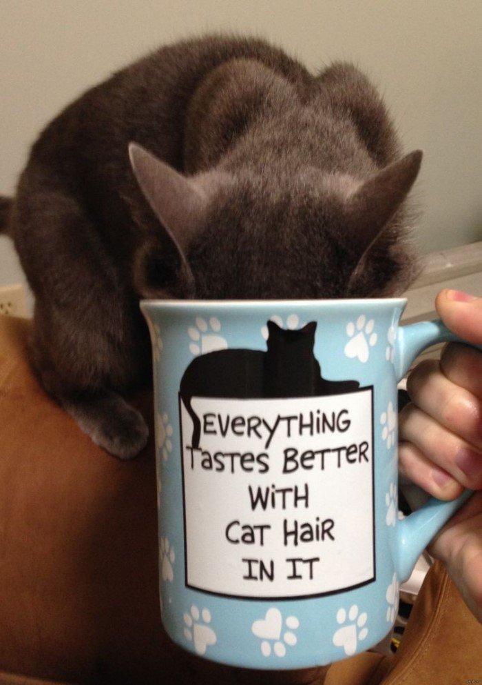 20 вещей, за которые мы так любим кошек