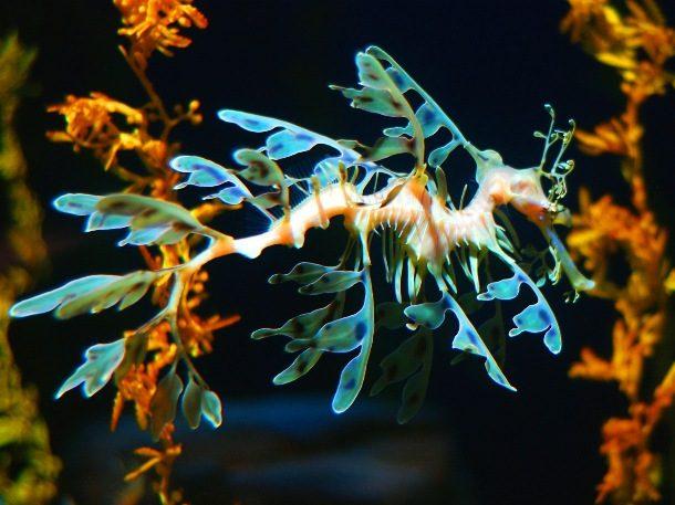 Удивительные создания морских глубин